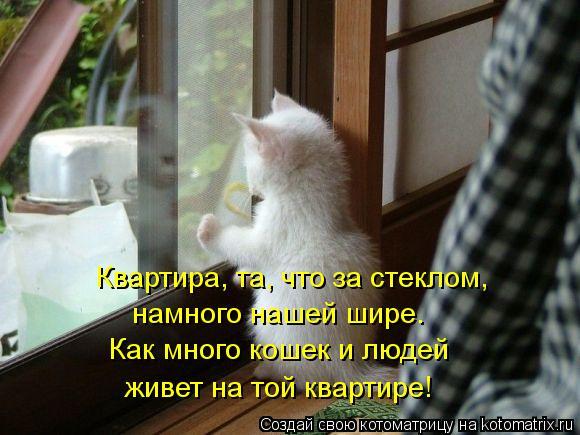 Котоматрица: Квартира, та, что за стеклом, намного нашей шире. Как много кошек и людей живет на той квартире!