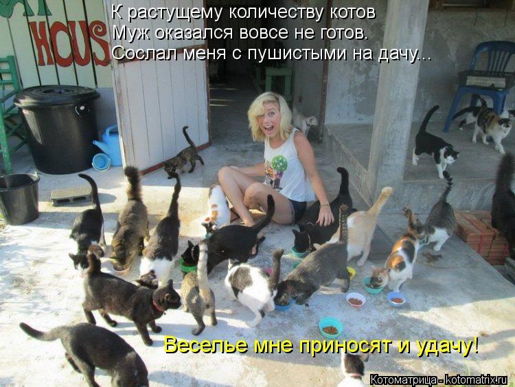 Котоматрица: К растущему количеству котов Муж оказался вовсе не готов. Веселье мне приносят и удачу! Сослал меня с пушистыми на дачу...