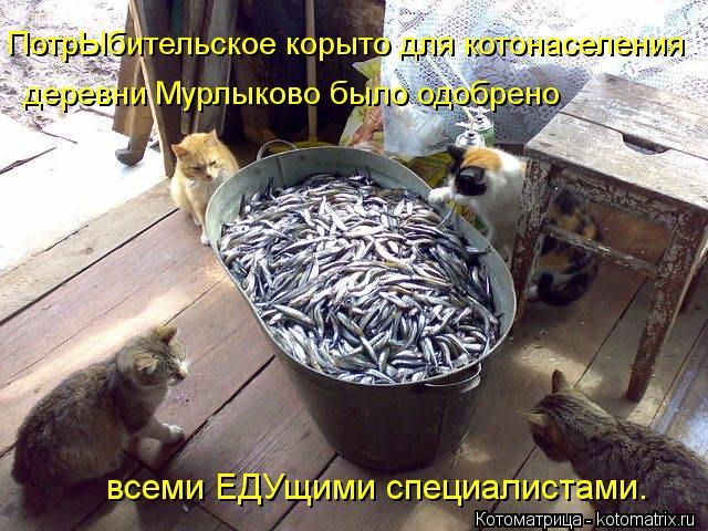 Котоматрица: ПотрЫбительское корыто для котонаселения деревни Мурлыково было одобрено  всеми ЕДУщими специалистами.