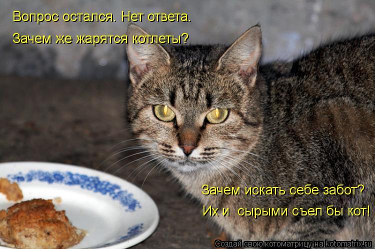 Котоматрица: Вопрос остался. Нет ответа. Их и  сырыми съел бы кот! Зачем же жарятся котлеты? Зачем искать себе забот?