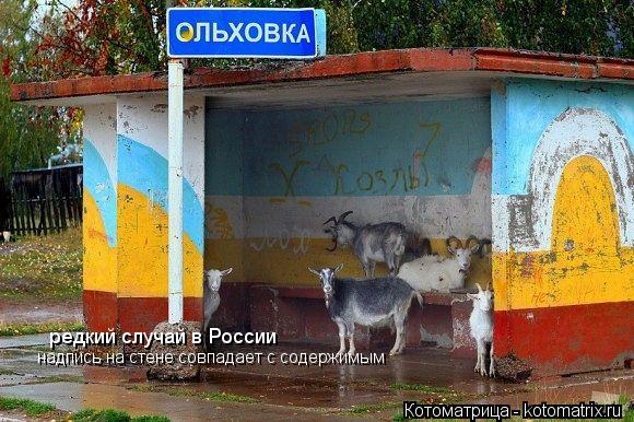 Котоматрица: редкий случай в России надпись на стене совпадает с содержимым