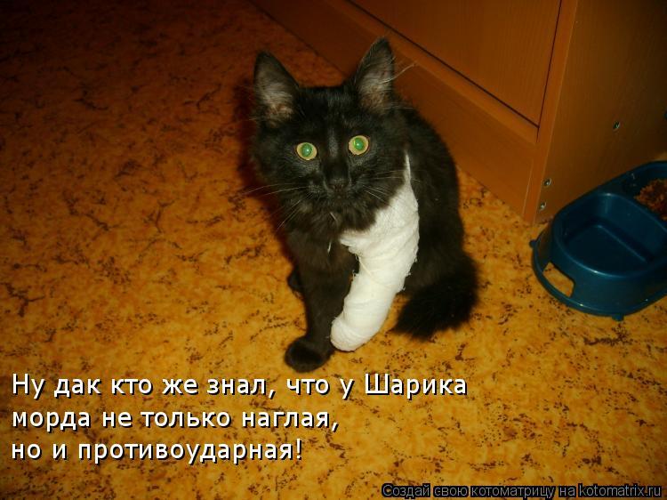 Котоматрица: Ну дак кто же знал, что у Шарика  морда не только наглая, но и противоударная!