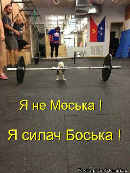 Котоматрица: Я не Моська ! Я силач Боська !