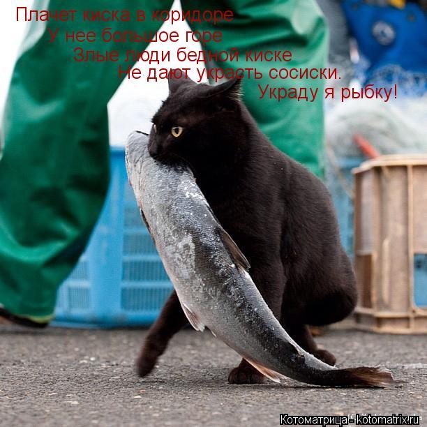 Котоматрица: Плачет киска в коридоре У нее большое горе Злые люди бедной киске Не дают украсть сосиски. Украду я рыбку!