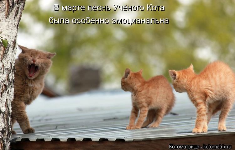 Котоматрица: В марте песнь Учёного Кота  была особенно эмоцианальна
