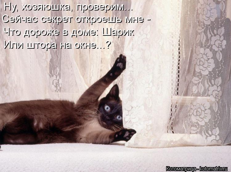 Котоматрица: Ну, хозяюшка, проверим... Сейчас секрет откроешь мне - Что дороже в доме: Шарик  Или штора на окне...?