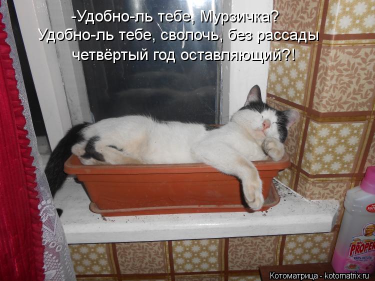 http://kotomatrix.ru/images/lolz/2013/11/05/kotomatritsa_m.jpg