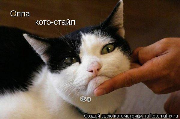 Котоматрица: Оппа кото-стайл