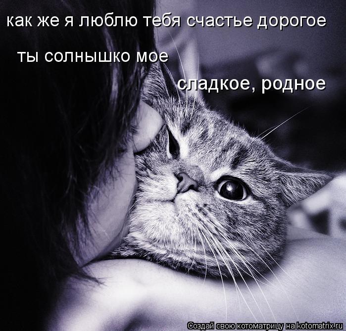 Котоматрица: как же я люблю тебя счастье дорогое ты солнышко мое  сладкое, родное