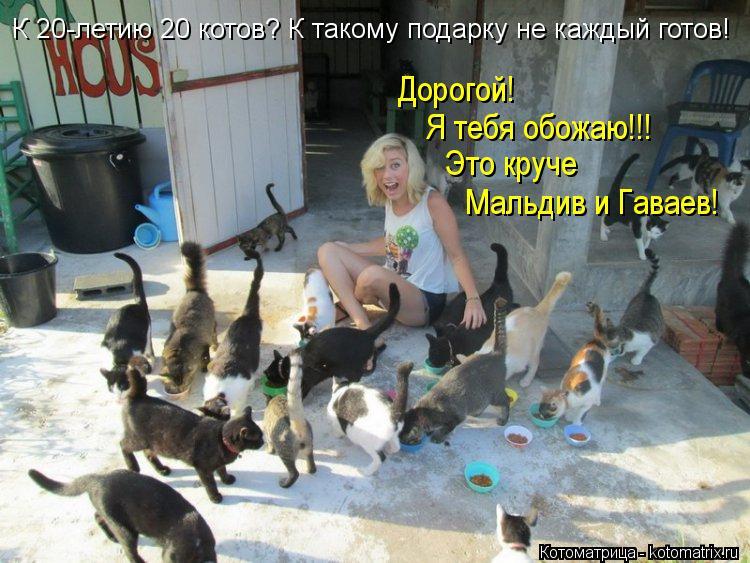 Котоматрица: К 20-летию 20 котов? К такому подарку не каждый готов! Дорогой!  Я тебя обожаю!!! Это круче  Мальдив и Гаваев!