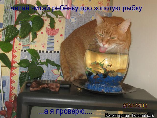 Котоматрица: ...читай читай ребёнку про золотую рыбку ...а я проверю....