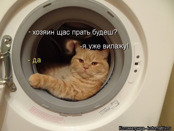 Котоматрица: хозяин щас прать будеш? да - - -я уже вилажу!