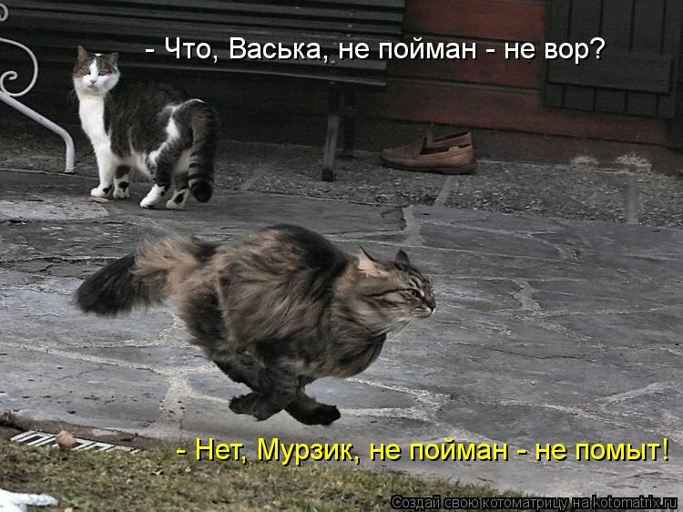 Котоматрица: - Что, Васька, не пойман - не вор? - Нет, Мурзик, не пойман - не помыт!