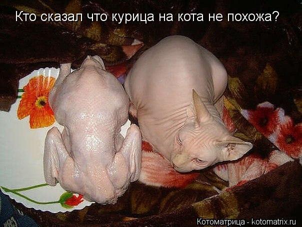 Котоматрица: Кто сказал что курица на кота не похожа?