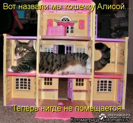 Котоматрица: Вот назвали мы кошечку Алисой... Теперь нигде не помещается.