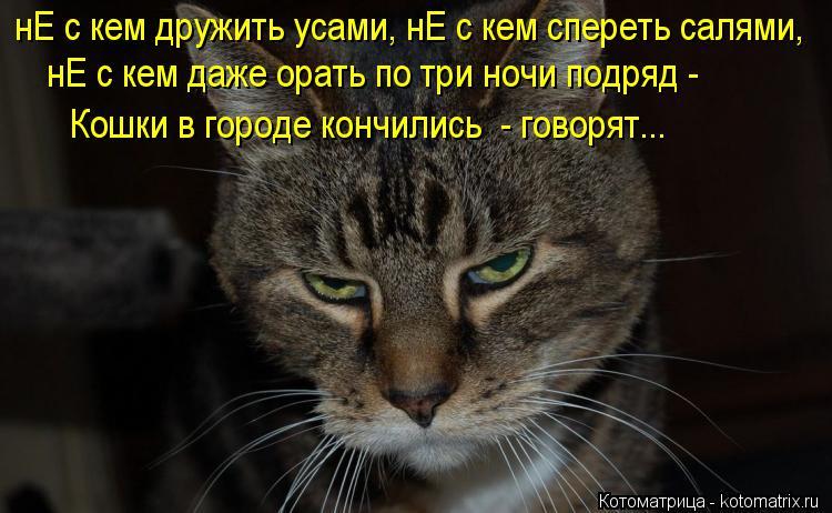 Котоматрица: нЕ с кем дружить усами, нЕ с кем спереть салями, нЕ с кем даже орать по три ночи подряд - Кошки в городе кончились  - говорят...