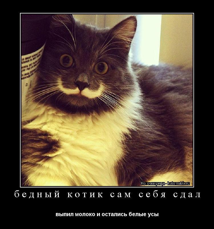 Котоматрица: бедный котик сам себя сдал выпил молоко и остались белые усы