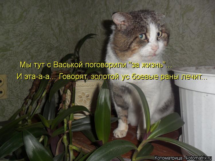 """Котоматрица: Мы тут с Васькой поговорили """"за жизнь""""... И эта-а-а... Говорят, золотой ус боевые раны лечит..."""