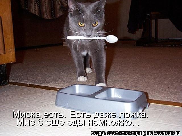 Котоматрица: Миска есть. Есть даже ложка. Мне б еще еды немножко...
