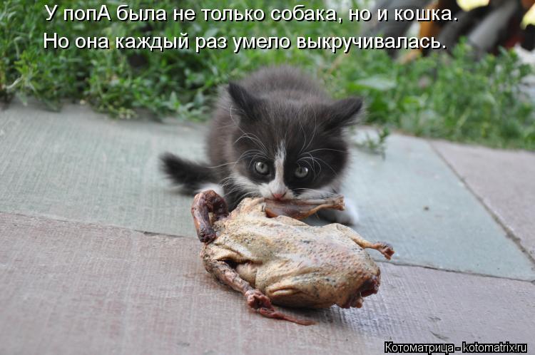 Котоматрица: У попА была не только собака, но и кошка.  Но она каждый раз умело выкручивалась.