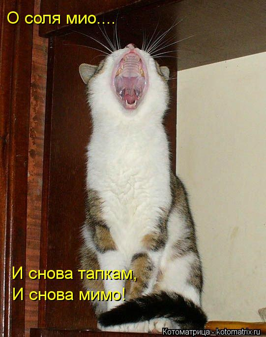 Котоматрица: О соля мио.... И снова тапкам, И снова мимо!