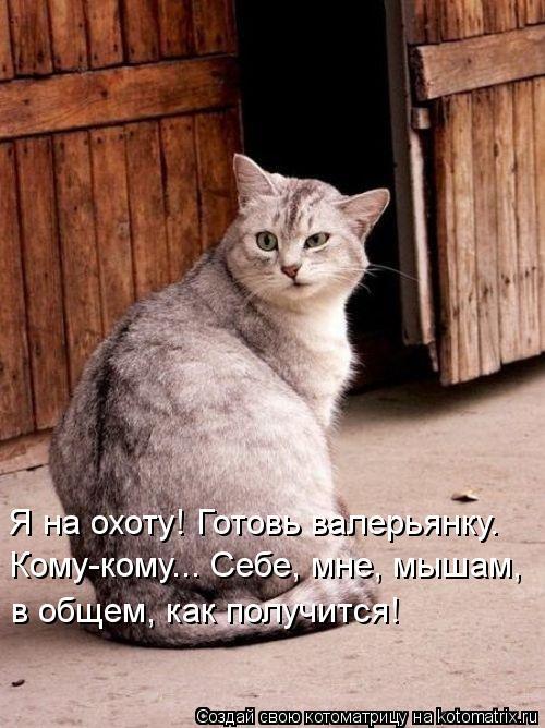 Котоматрица: Я на охоту! Готовь валерьянку.  Кому-кому... Себе, мне, мышам, в общем, как получится!