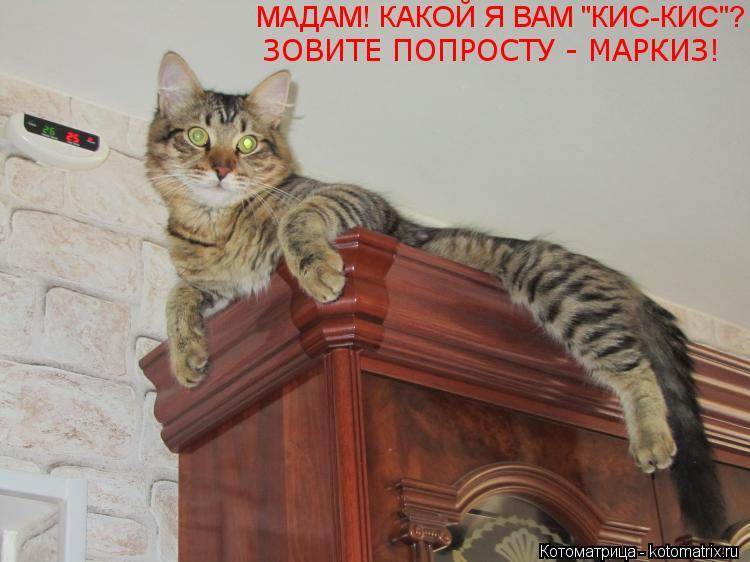 кот маркиз не ловит