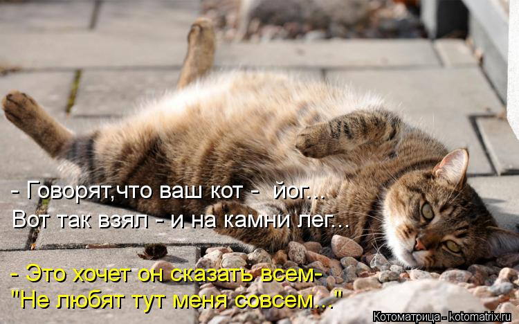 """Котоматрица: - Говорят,что ваш кот -  йог... Вот так взял - и на камни лег... - Это хочет он сказать всем- """"Не любят тут меня совсем..."""""""