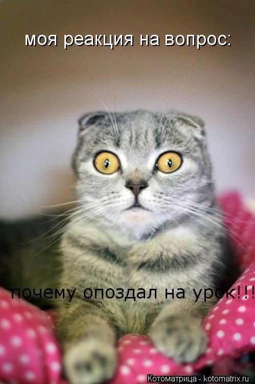 Котоматрица: почему опоздал на урок!!! моя реакция на вопрос: