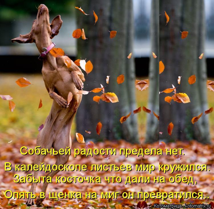 Котоматрица: Собачьей радости предела нет. Забыта косточка что дали на обед, Опять в щенка на миг он превратился.. В калейдоскопе листьев мир кружился.