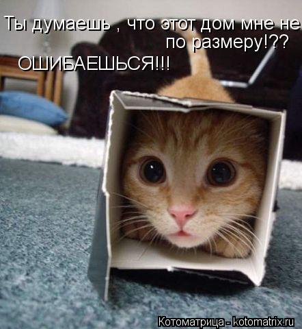 Котоматрица: Ты думаешь , что этот дом мне не по размеру!?? Ты думаешь , что этот дом мне не по размеру!?? по размеру!?? по размеру!?? ОШИБАЕШЬСЯ!!!