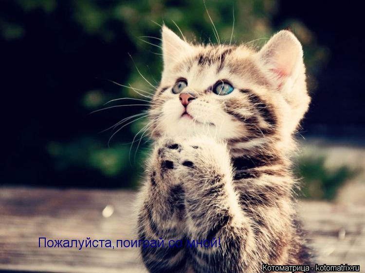 Котоматрица: Пожалуйста,поиграй со мной!