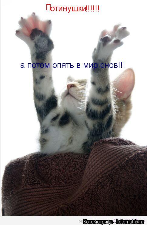 Котоматрица: П отинушки !!!!!! а потом опять в мир снов!!!