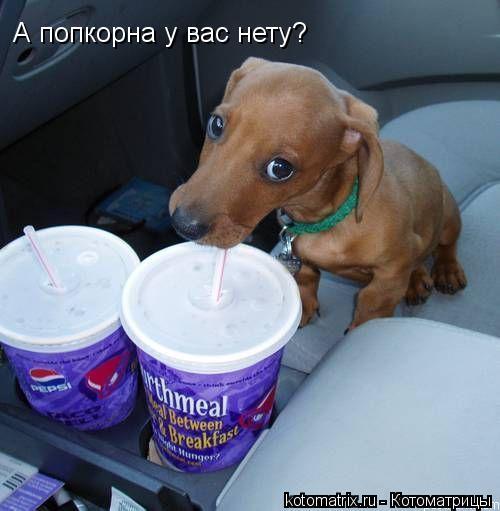 Котоматрица: А попкорна у вас нету?