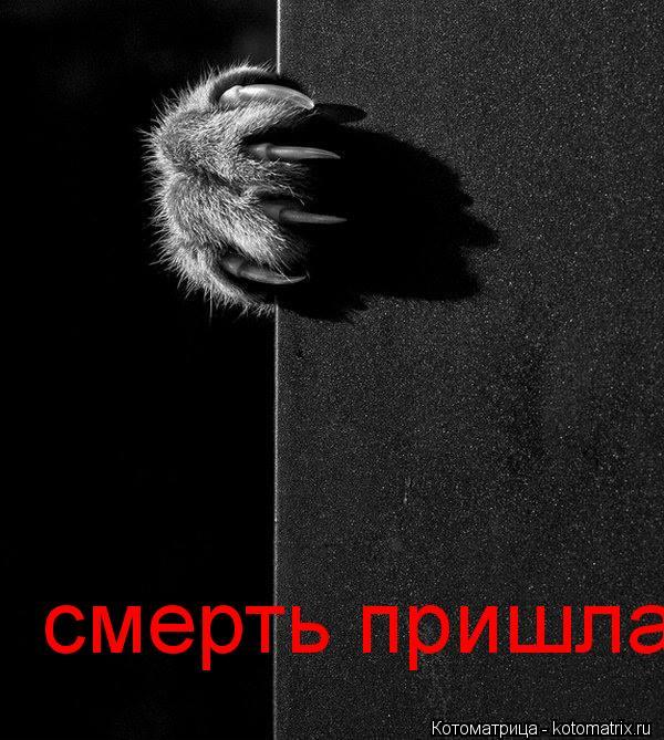 Котоматрица: смерть пришла