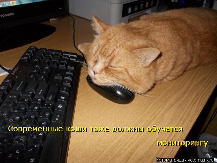 Котоматрица: Современные коши тоже должны обучатся мониторингу Современные коши тоже должны обучатся  мониторингу мониторингу