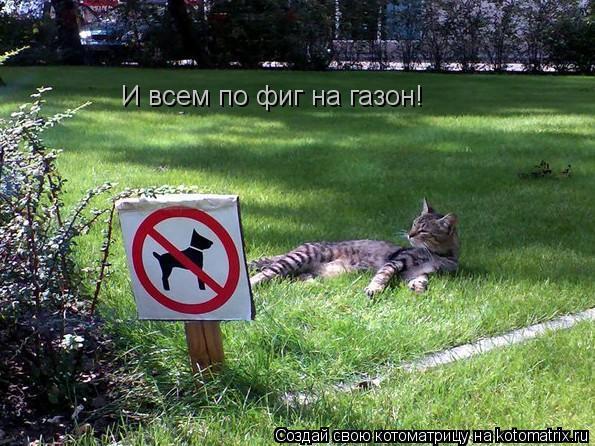 Котоматрица: И всем по фиг на газон!