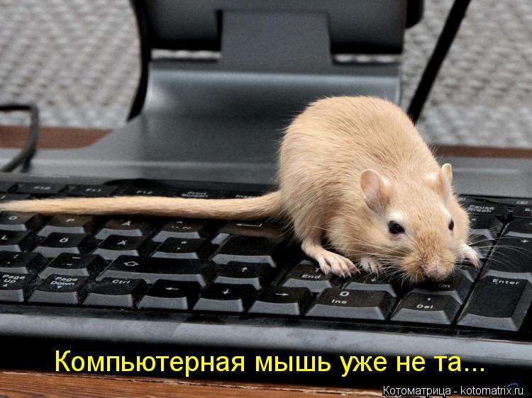 Котоматрица: Компьютерная мышь уже не та...