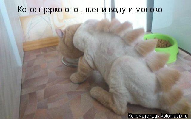 Котоматрица: Котоящерко оно..пьет и воду и молоко