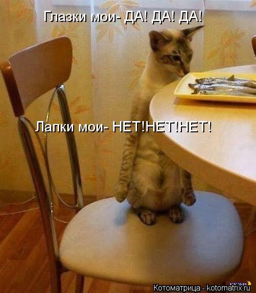 Котоматрица: Глазки мои- ДА! ДА! ДА! Лапки мои- НЕТ!НЕТ!НЕТ!