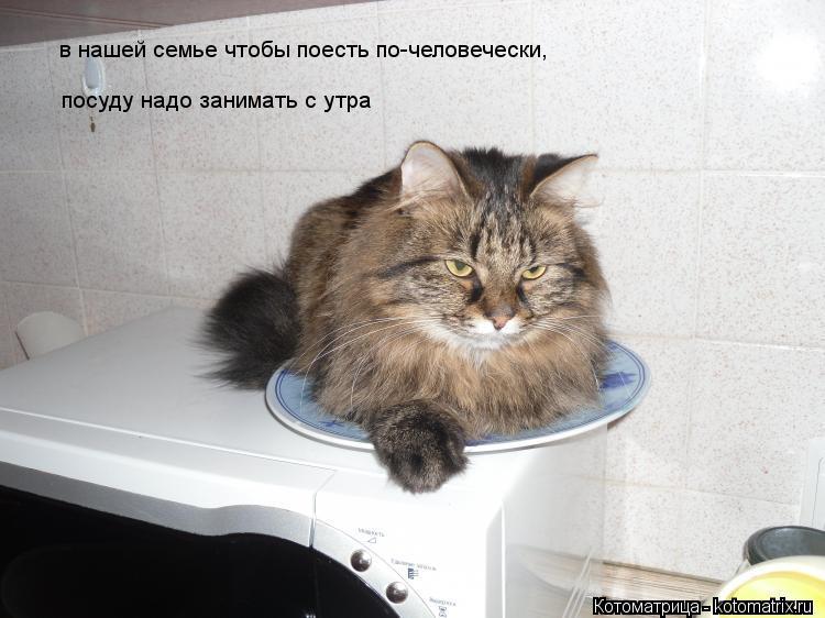 Котоматрица: в нашей семье чтобы поесть по-человечески, посуду надо занимать с утра