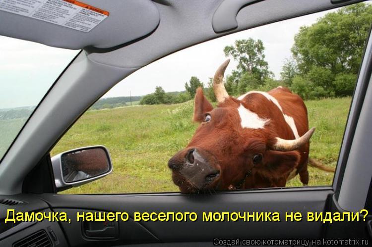 Котоматрица: Дамочка, нашего веселого молочника не видали?