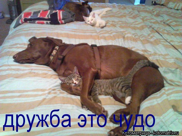 Котоматрица: дружба это чудо
