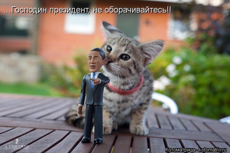 Котоматрица: ...Господин президент, не оборачивайтесь!!