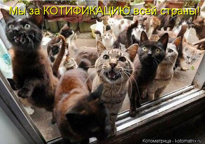 Котоматрица: Мы за КОТИФИКАЦИЮ всей страны!