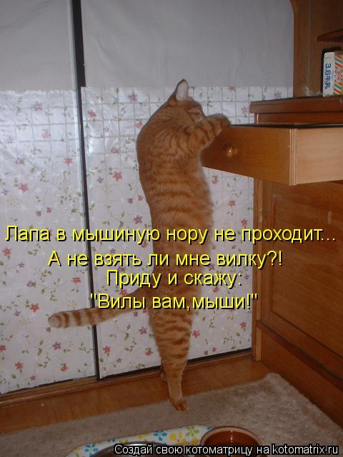 """Котоматрица: Лапа в мышиную нору не проходит... А не взять ли мне вилку?! Приду и скажу: """"Вилы вам,мыши!"""""""