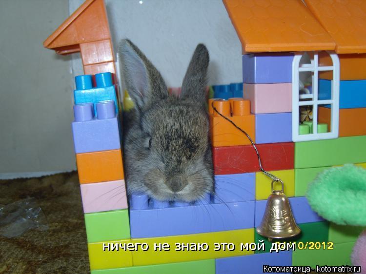 Котоматрица: ничего не знаю это мой дом