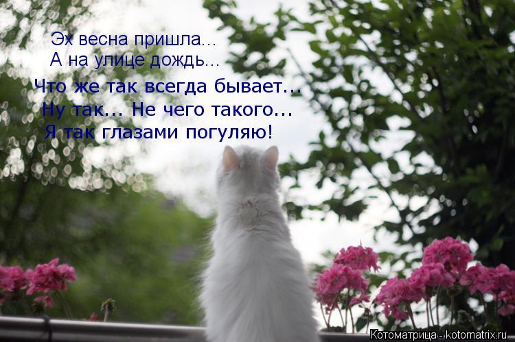Котоматрица: Эх весна пришла... А на улице дождь... Что же так всегда бывает... Ну так... Не чего такого... Я так глазами погуляю!