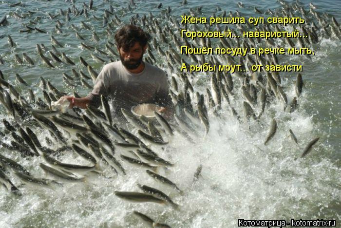 Котоматрица: Жена решила суп сварить Гороховый... наваристый... Пошёл посуду в речке мыть, А рыбы мрут... от зависти