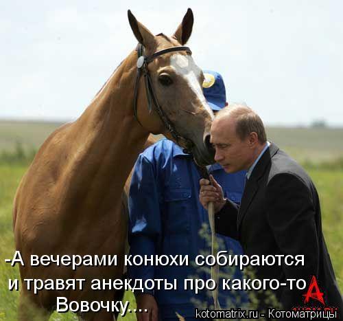 Котоматрица: -А вечерами конюхи собираются  и травят анекдоты про какого-то Вовочку....